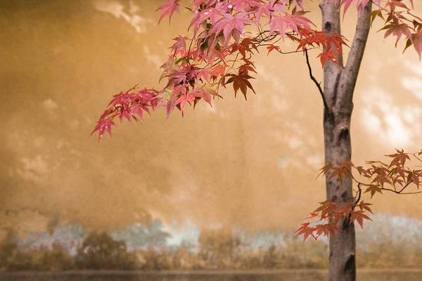 Kansai Region Wall Art - Photograph - Japanese Maple by Ei Katsumata