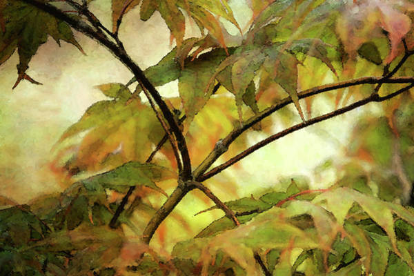 Photograph - Japanese Maple Impression 5585 Idp_2 by Steven Ward