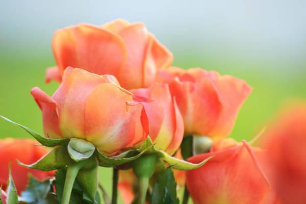 Photograph - Jardin De Rosas by Melanie Moraga