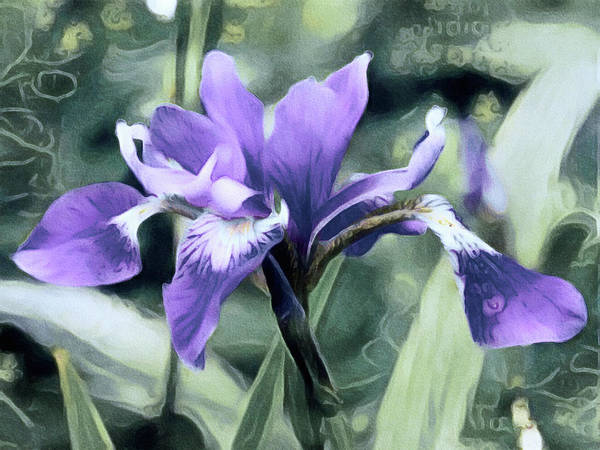 Purple Iris Mixed Media - Jardin Du Viole - Garden Of Purple by Susan Maxwell Schmidt