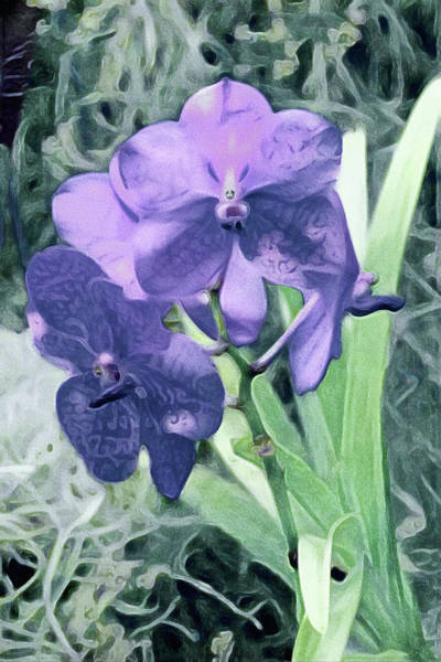 Mixed Media - Jardin Du Viole Il - Garden Of Purple Series by Susan Maxwell Schmidt