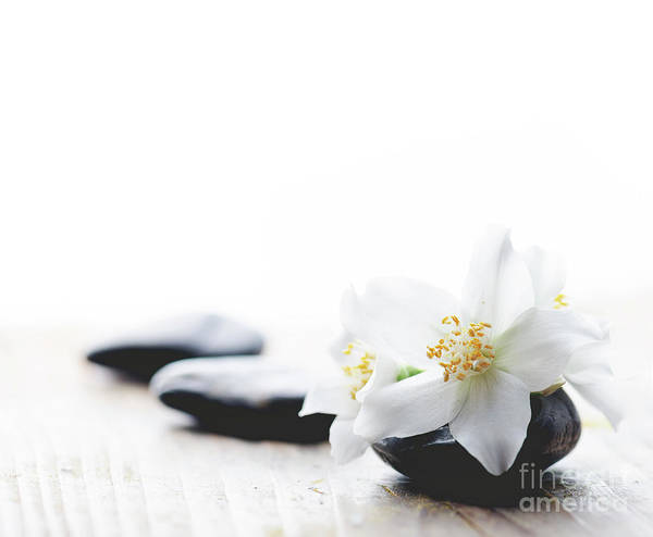 Wall Art - Photograph - Jasmine Flower On Spa Stones by Jelena Jovanovic