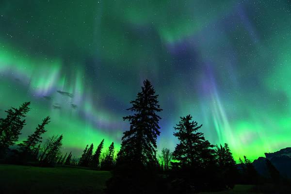 Photograph - Jasper National Park Aurora by Dan Jurak