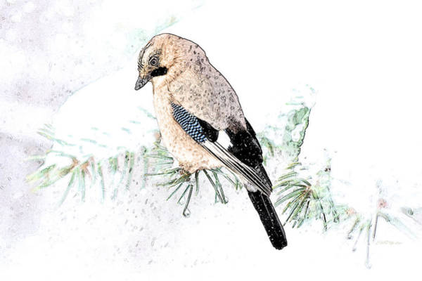 Photograph - Jay In A Snowstorm by Ericamaxine Price