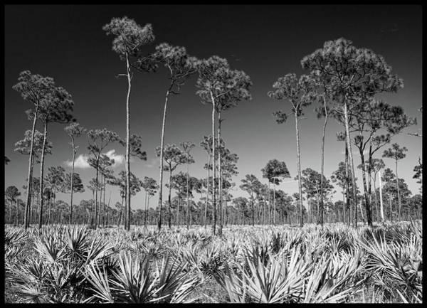 Photograph - J.d. Prarie by Michael Raiman