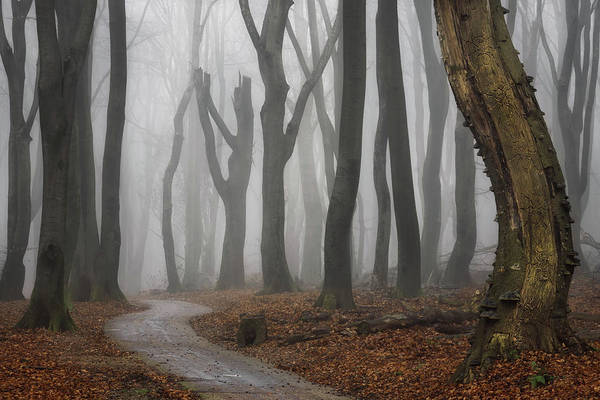 Wall Art - Photograph - Jeepers Creepers by Martin Podt