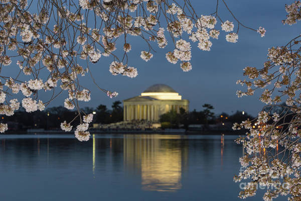 Photograph - Jefferson Memorial And Cherry Blossoms I by Clarence Holmes