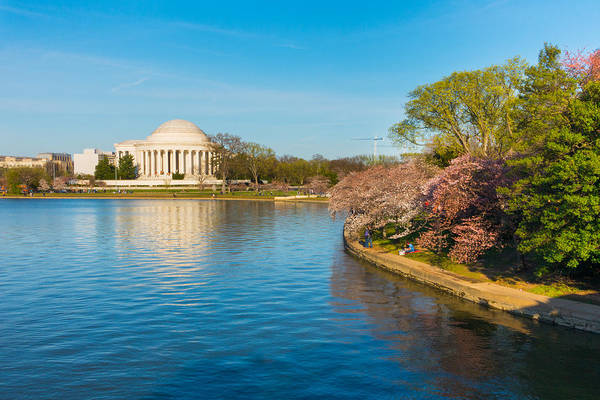 Photograph - Jefferson Memorial And Cherry Blossoms by SR Green