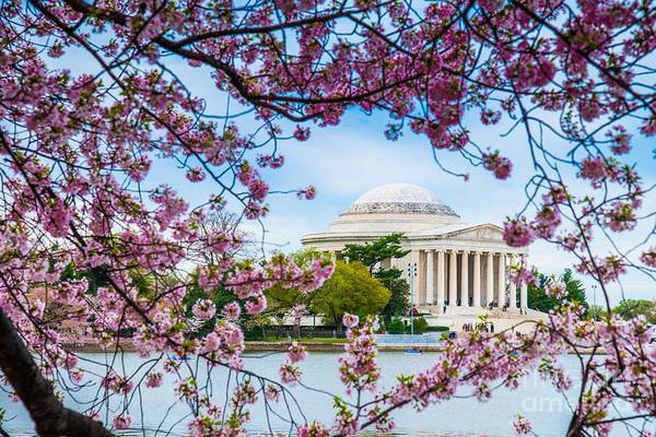 Photograph - Jefferson Memorial Cherry Blossoms by Jim DeLillo