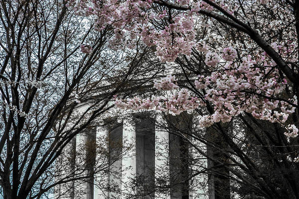 Photograph - Jefferson Memorial In Spring by Karen Saunders