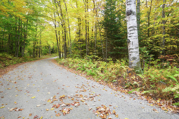 Photograph - Jefferson Notch Road - White Mountains New Hampshire  by Erin Paul Donovan