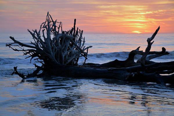 Photograph - Jekyll Island Driftwood Beach 2018 April by Bruce Gourley