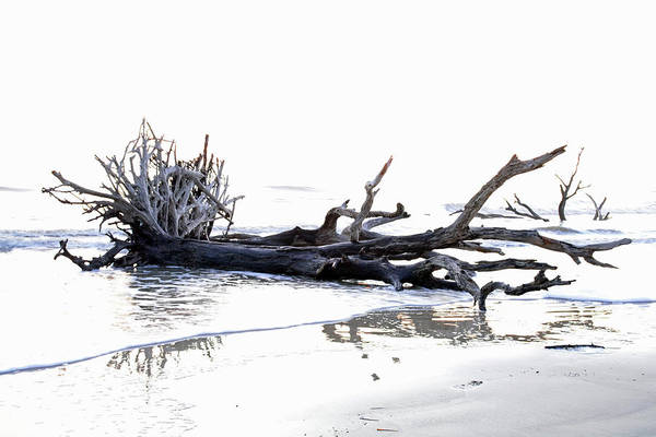 Photograph - Jekyll Island Driftwood Beach Black And White by Bruce Gourley