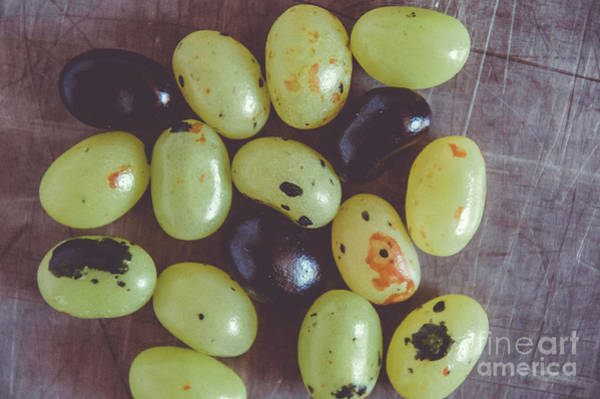 Photograph - Jelly Beans 6 by Andrea Anderegg