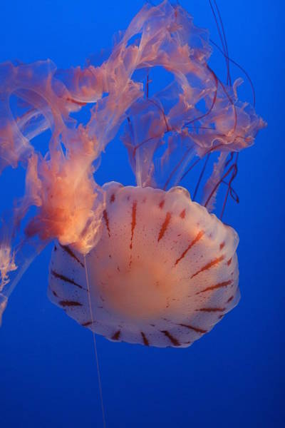 Photograph - Jelly by David Andersen