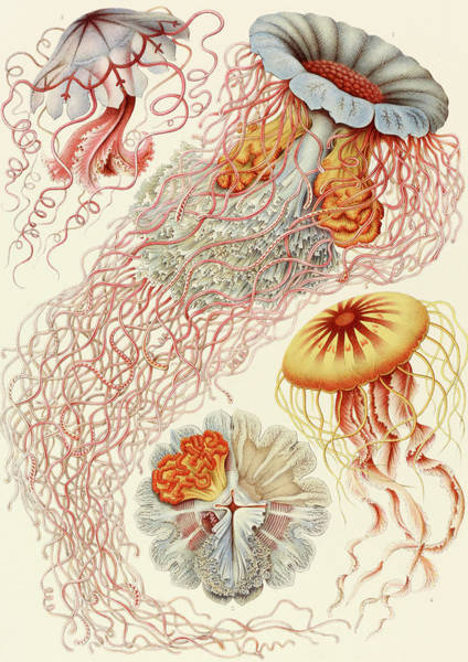 Abstract People Painting - Jellyfish by Ernst Haeckel