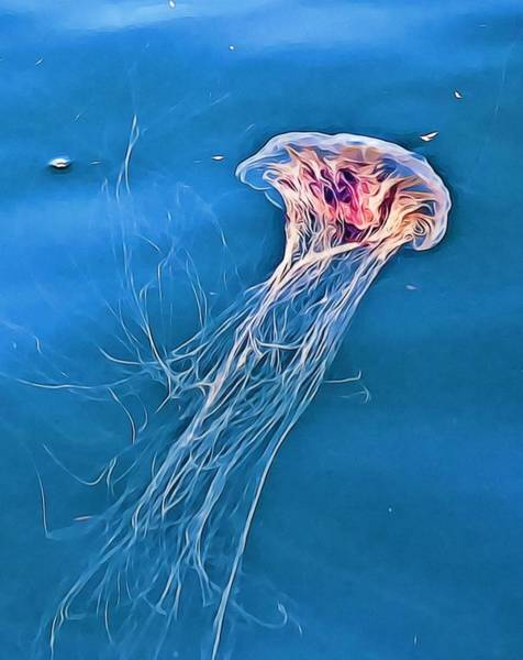 Photograph - Jellyfish by Tatiana Travelways