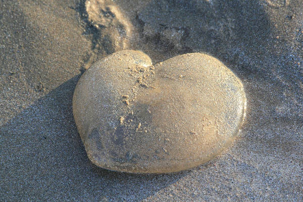 Photograph - Jellyfish With A Big Heart by Shane Bechler