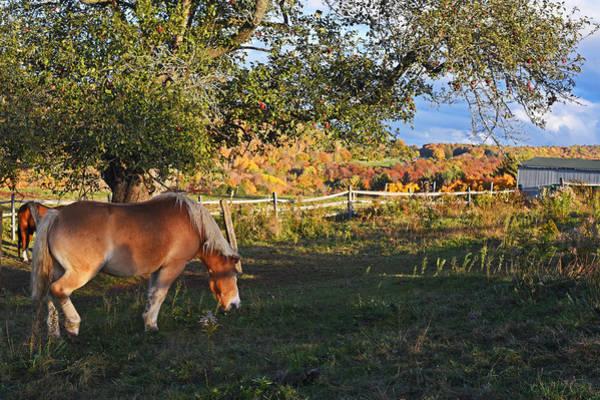 Photograph - Jenne Farm Horse Reading Vermont Vt Close by Toby McGuire