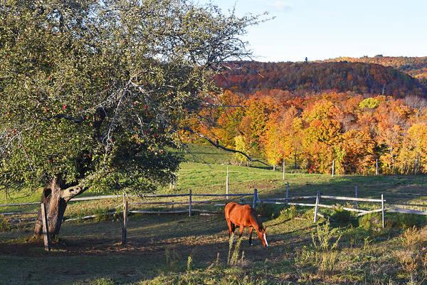Photograph - Jenne Farm Horse Reading Vermont Vt by Toby McGuire