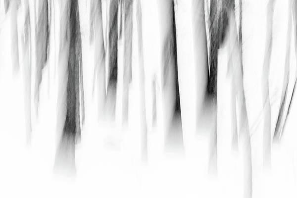 Photograph - Jenne Farm Maple Trees by Kristen Wilkinson