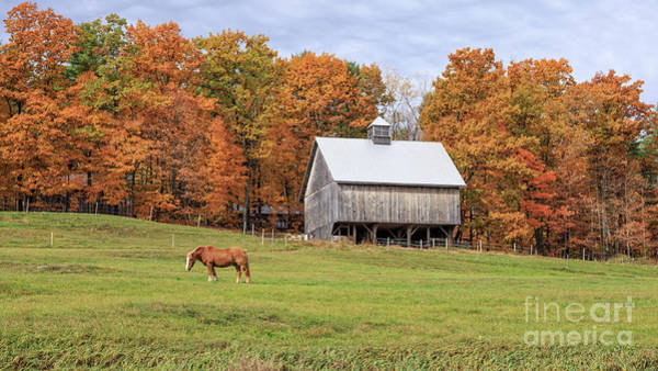 Photograph - Jericho Hill Vermont Horse Barn Fall Foliage by Edward Fielding