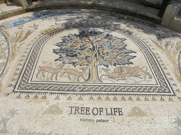 Photograph - Jericho Tree Of Life by Donna L Munro