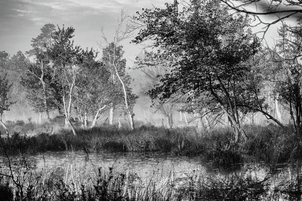 Photograph - Jersey Pine Lands In Black - White by Louis Dallara
