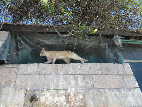 Photograph - Jerusalem Israel Cat In High Place by Donna L Munro