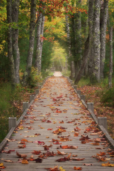 Wall Art - Photograph - Jesup Path - Acadia National Park by Jeff Bazinet