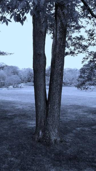 Photograph - Jesus Christ Tree Cyan by Rob Hans
