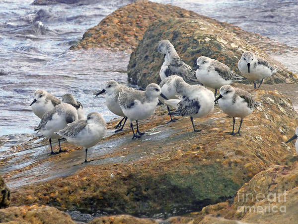 Wall Art - Photograph - Jetty Lag by Lucyna A M Green