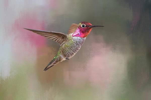 Hummingbird Wings Photograph - Jewel Of Jerome by Donna Kennedy
