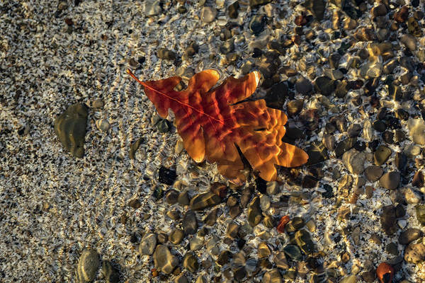 Photograph - Jewel Toned Autumn by Georgia Mizuleva