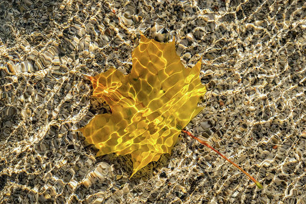 Photograph - Jewel Toned Autumn In Silky Golden Yellow by Georgia Mizuleva