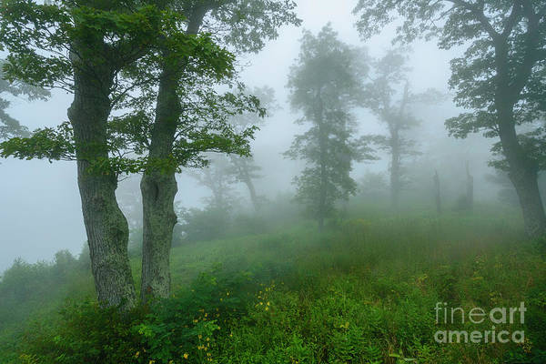 Photograph - Jewell Hollow Overlook by Thomas R Fletcher