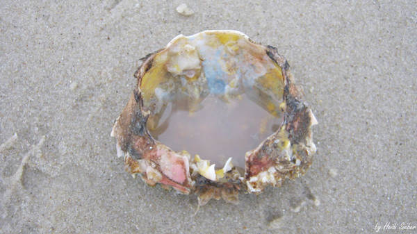 Photograph - Jewelry Of The Ocean by Heidi Sieber