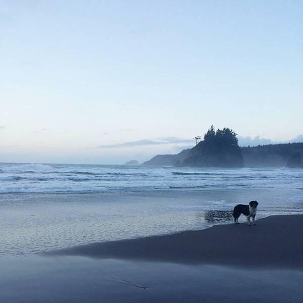 Photograph - #jj_forum_1471 #latergram #beach #dog by Tricia Elliott