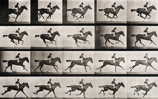 Dressage Wall Art - Photograph - Jockey On A Galloping Horse by Eadweard Muybridge