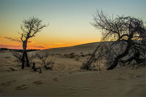Photograph - Jockey's Ridge View by Donald Brown