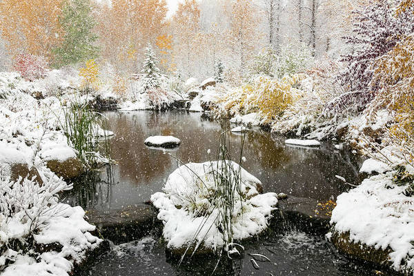 Photograph - John Denver Sanctuary In Snow by Jemmy Archer