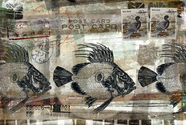 Wall Art - Photograph - John Dory Fish Postcard by Carol Leigh