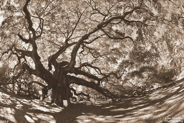Photograph - Johns Island Angel Oak Sepia by Lisa Wooten