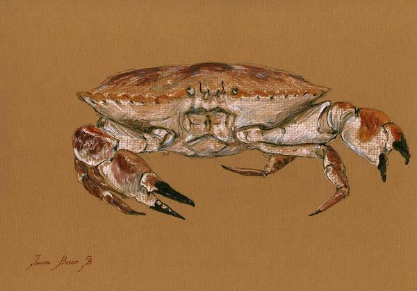 Crab Painting - Jonah Crab by Juan  Bosco