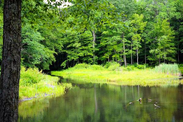 Laurel Hill Creek Photograph - Jones Mill Run Creek by Shelley Smith