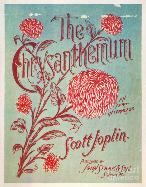 Turn Of The Century Wall Art - Photograph - Joplin: Chrysanthemum by Granger