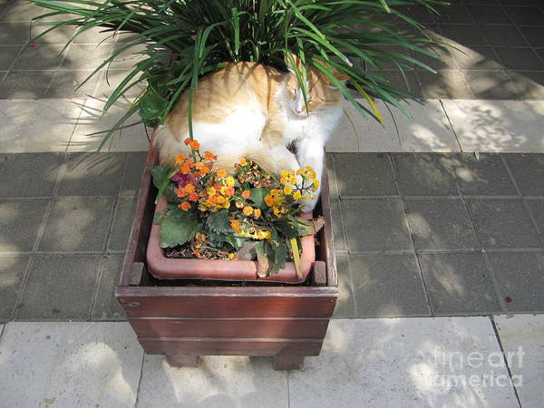 Photograph - Jordan River Baptism Cat by Donna L Munro