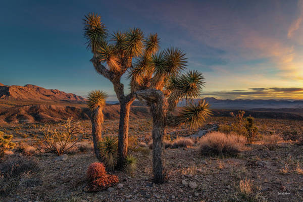 Wall Art - Photograph - Joshua Sunset Nevada by Leland D Howard