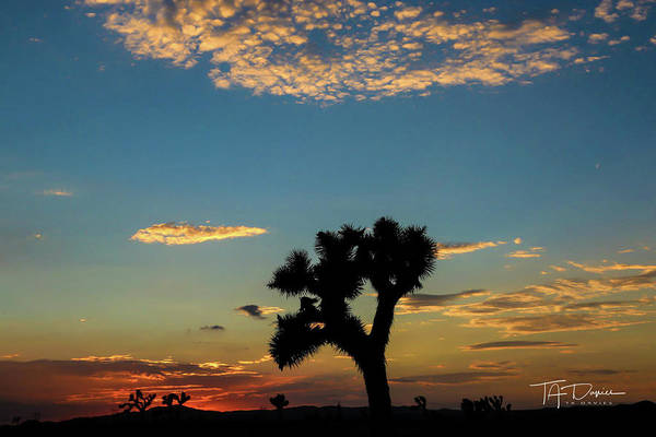 Photograph - Joshua Sunset by T A Davies