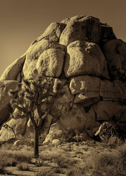 Yucca Palm Photograph - Joshua Tree And Rock Pile - Sepia by Stephen Stookey